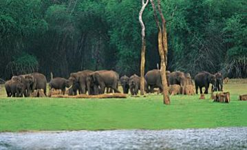 Kerala Wildlife Eco Tours