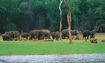 Kerala Wildlife Eco Tours